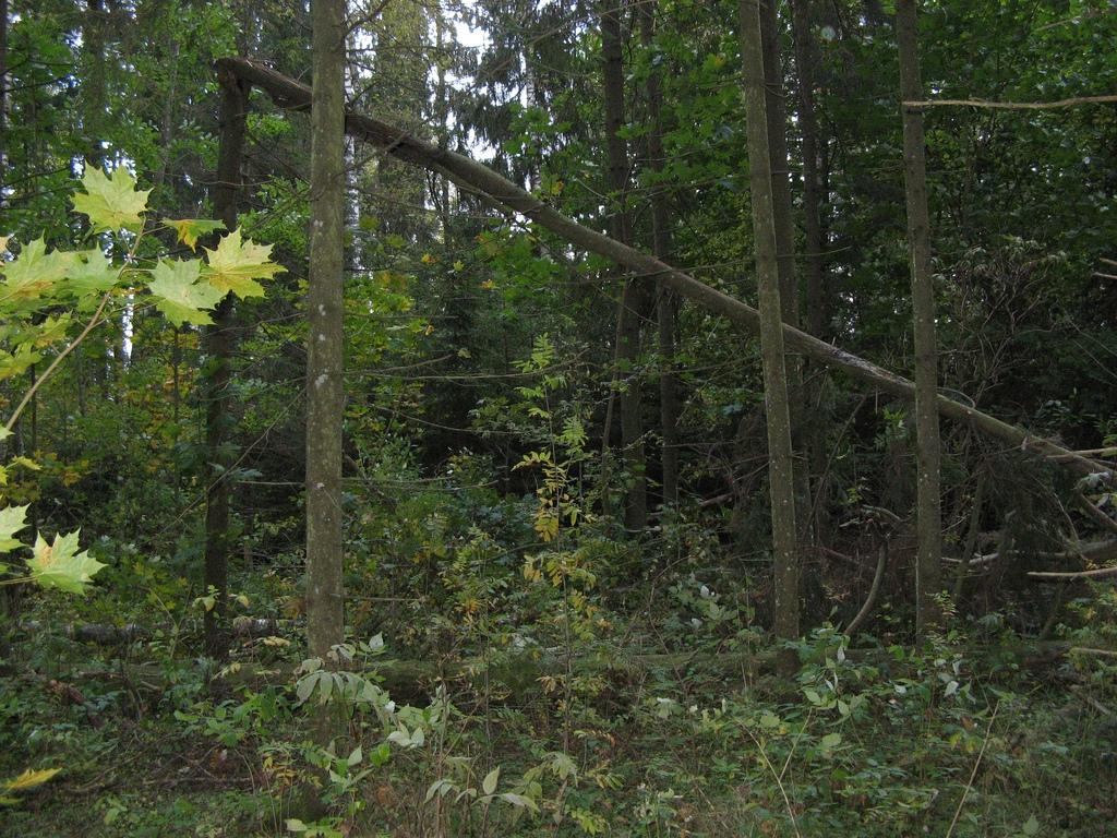 e04f9c78dc6 RMK looduskaamera näitab punahirvi – Eesti elu | GoodNews