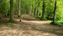 RMK tahab kuue aasta pärast metsa meelitada 2,5 miljonit inimest